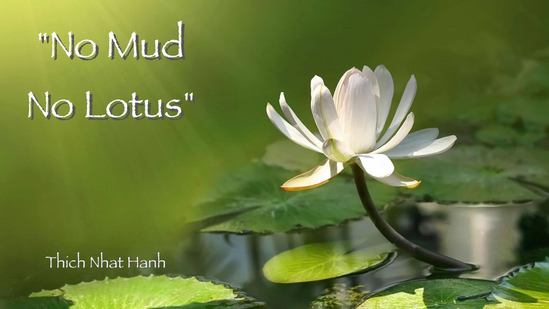 no-mud-no-lotus.jpg